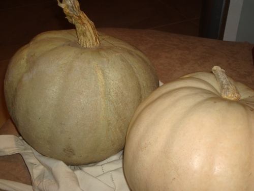 The Green Pumpkin and the White Pumpkin